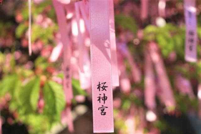 sakurajingu-gosyuin038