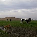 2006-10-01 um 13-16-39 - Hund & Herde - Tarbek
