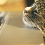 20180317-212403 - Kater am Macbook Pro