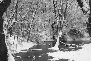 Snowy Woodland.