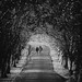 The Avenue by - Andy Gardner -