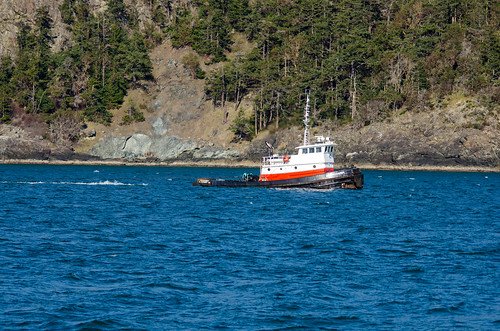 Whale Watching with Island Adventures-168