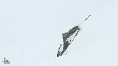 Snowhiking Grindelwald First - Bort
