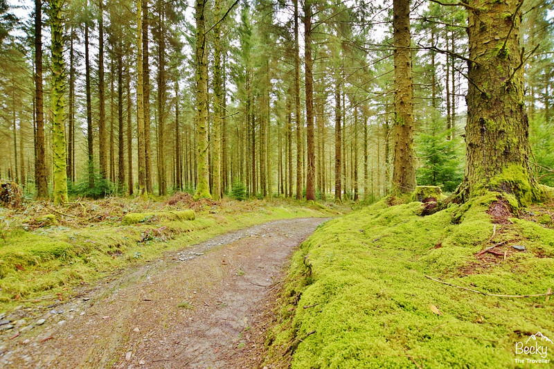 Hafren Forest - River Severn trail Wales