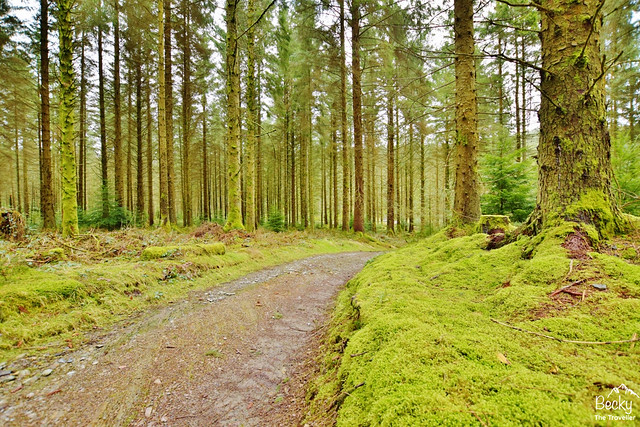 Hafren Forest - River Severn trail Wales (11)