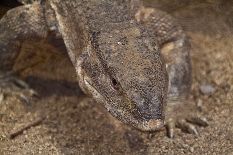 Reptilium 2012