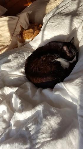 sunny snuggles