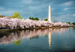Cherry Blossom Peak Bloom for 2018 is predicted