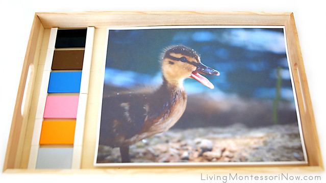 Matching Montessori Color Box 3 Shades of Color to a Duckling Photo