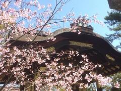 earlier at hokoji❤︎ ・ ・ ・ #方広寺 #京都 #桜 #hokoji #kyoto #japan #sakura #latergram #nofilter