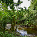 Creek flowing into Rio Maimon - Higuey Dominican Republic