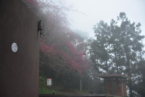 瓦拉米步道-瓦拉米山屋