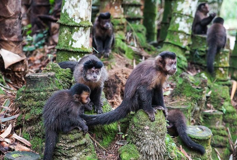 The Monkees Monkey Apina Jardim Botanico Botanical Brasilia Brazil Rio de Janeiro