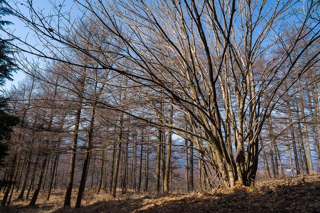 シラジクボへの斜面に茂る樹林