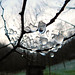 Ice Clings to a Spiderweb by *amalthea*