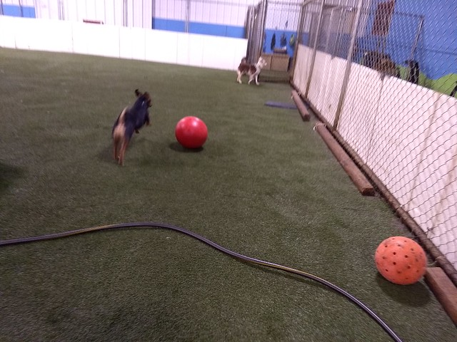 03-13-18 Indestructiball Chase! :)