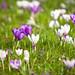 Spring Colours @ Peckham Rye by Adam Swaine