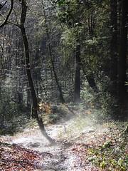 Forêt de Chabrières - Photo of Guéret