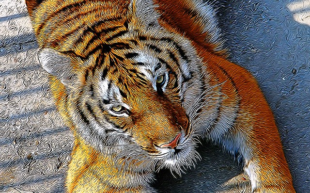 Toronto Ontario - Canada -  Tiger at the Zoo
