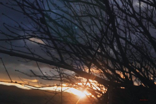 clouds edit flowers nature photography sabanovicphotography shadow sunset sky throughherlens trees