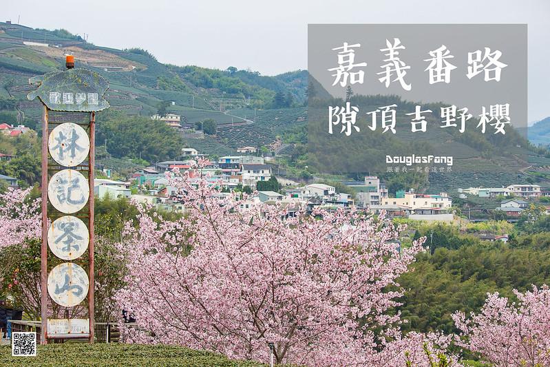 【遊記】嘉義番路隙頂吉野櫻 (1)