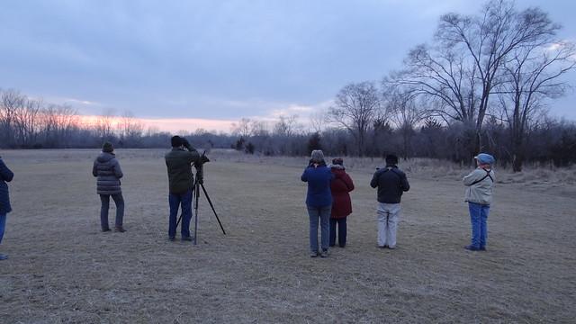 birders birding American woodcock