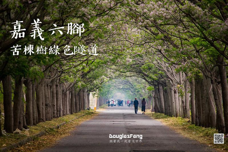 【遊記】嘉義六腳苦楝樹隧道 (1)