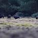 23 maart Wild in de bossen van Vaassen