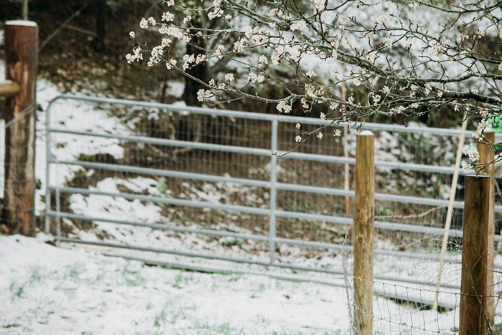 snow03242018-0853032418