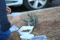 Des chats et des humains