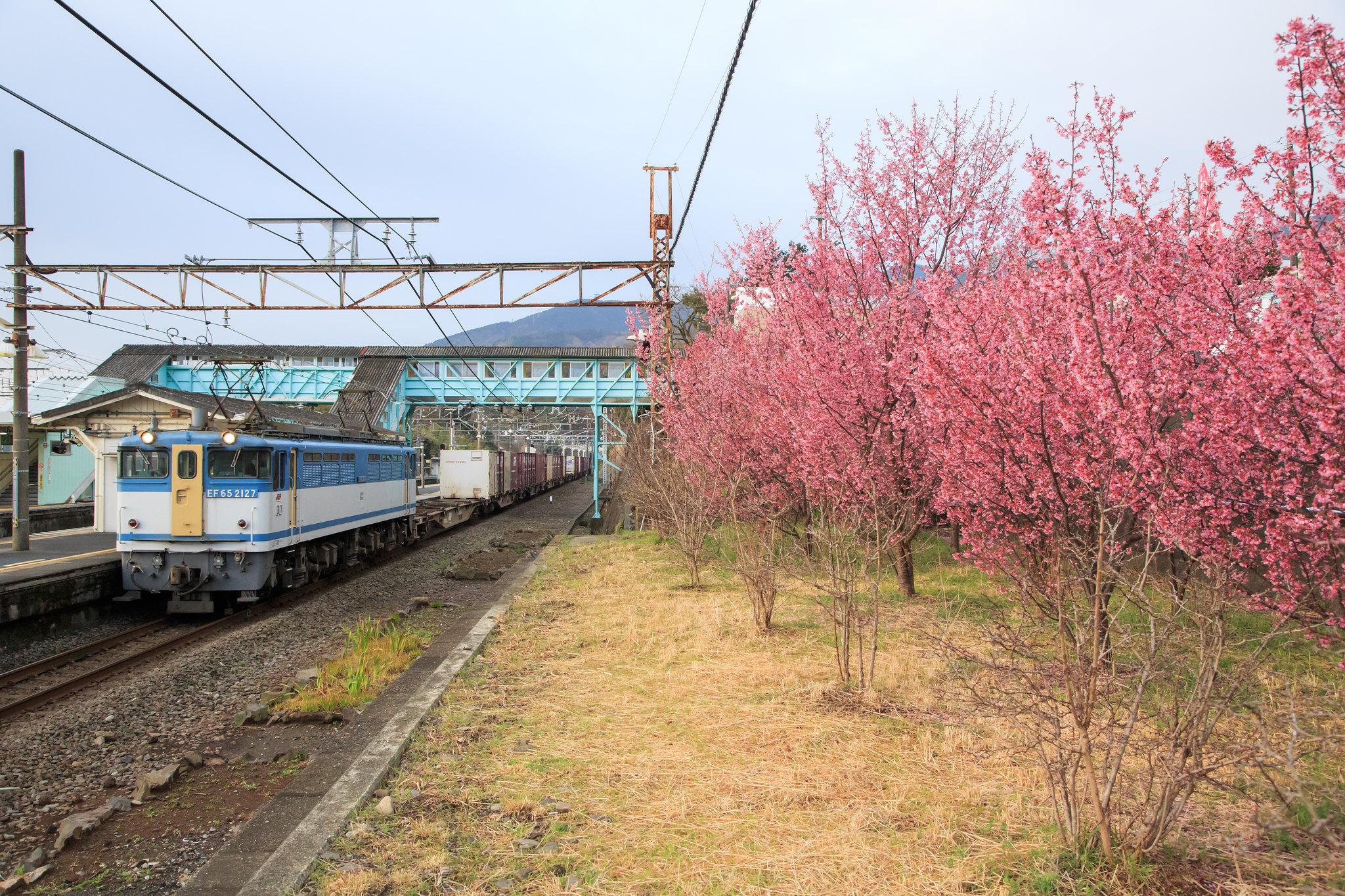 EF65 2127 / Tokaido Line