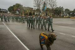Tercio Alejandro Farnesio y Grupo de Caballería de #LaLegión 'Sábado Legionario'