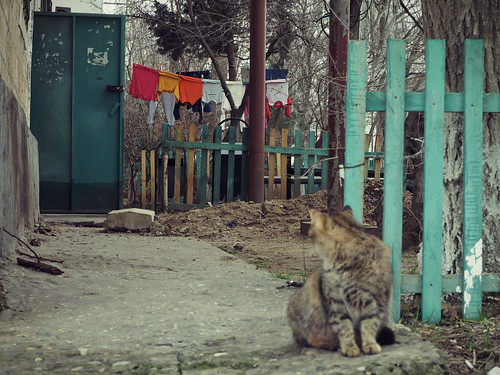 olympus omd em1 russia street pretty cats vision photography streeart flickr cityscape color colorfull