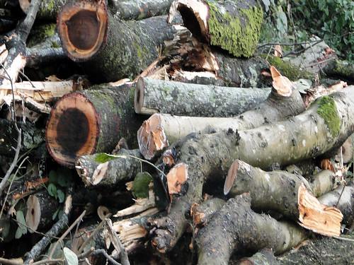 चमोली से कर्णप्रयाग तक कटे हुए पेड़ों के ढेर मिल जाएँगे