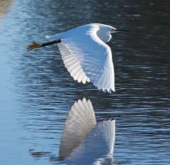 Mirrored in flight