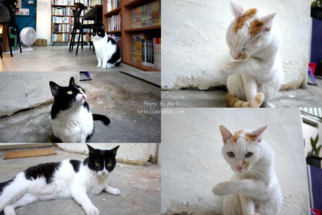 40078950184 69dca4a24f b - 台中獨立書店|梓書房-二手書、咖啡,和貓咪一起看書吧!
