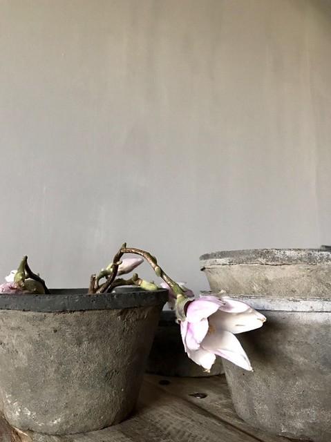 Pot met roze bloemen