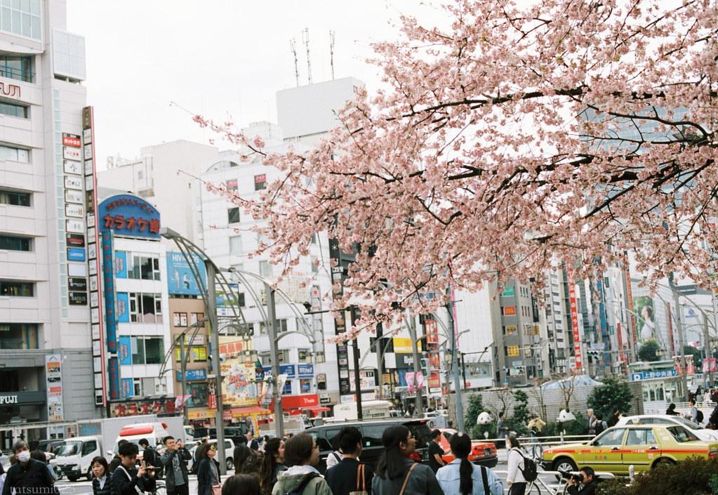 2018-03-17 上野公園桜模様 KODAK PORTRA 160 001
