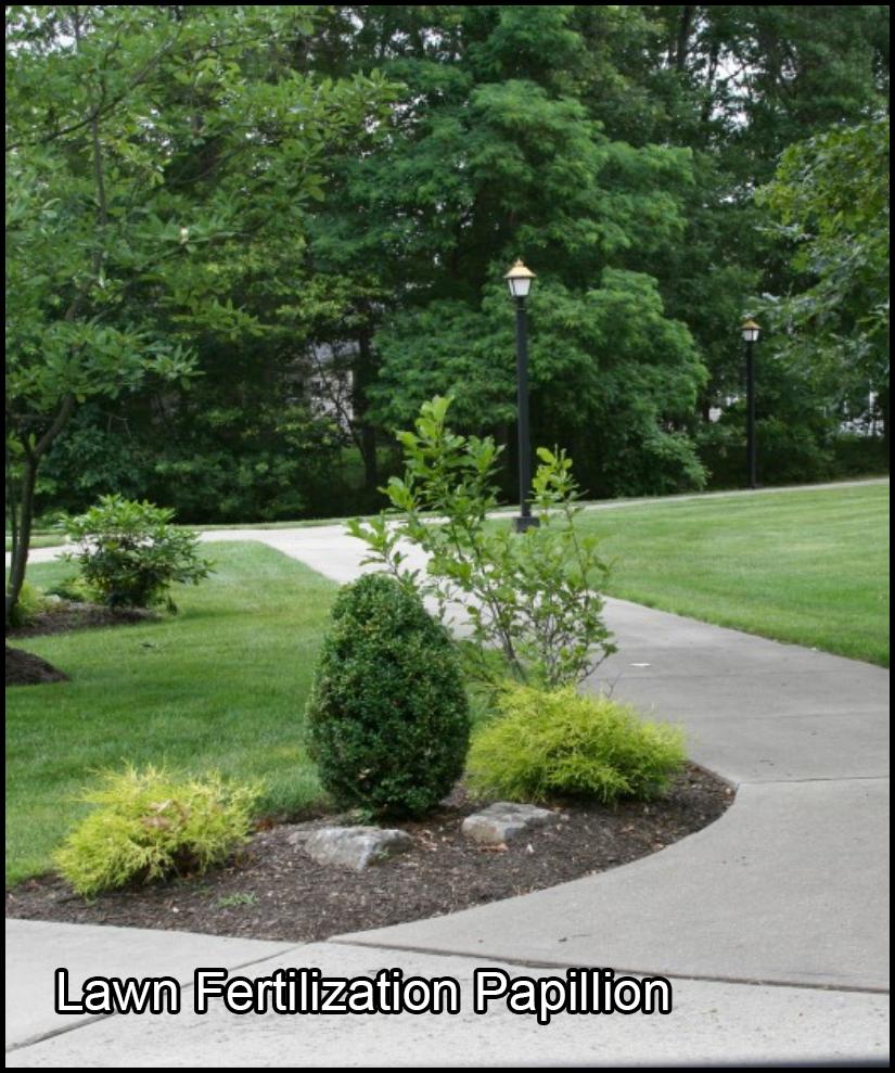 lawn fertilization papillion