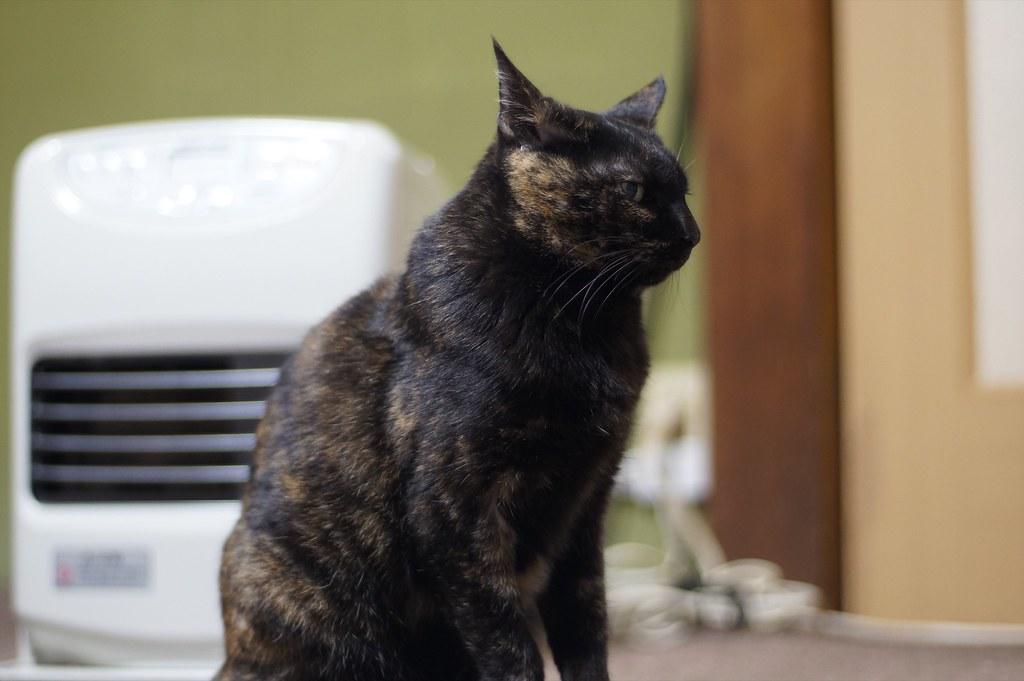 Rust Cat(サビ猫)