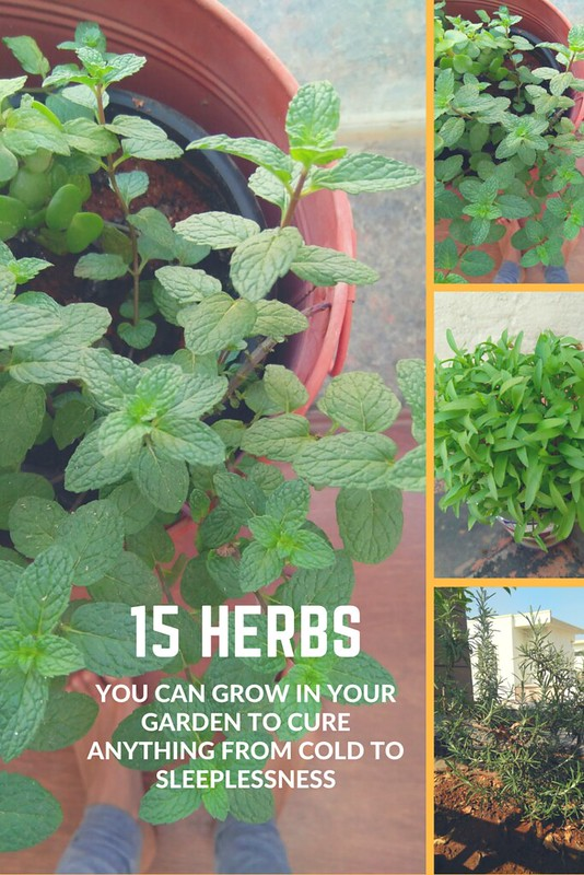 15 herbs to grow in your garden to cure anything from cold to sleeplessness