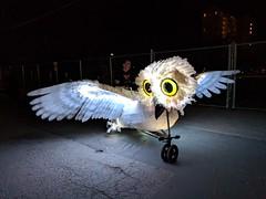 Owl bike