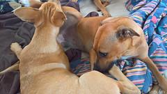 Puppy Play Gigi and Hutch