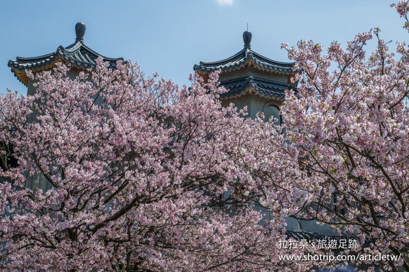 台北陽明山東方寺,盛開的粉紅櫻花搭上清幽建築,意境滿滿超好拍,春天賞櫻,可別錯過這兒