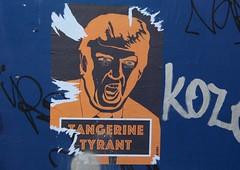 Tangerine Tyrant