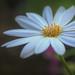 Primavera blanca por Blas Torillo