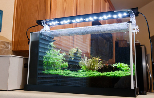 Finnex Planted+ 24/7 SE mounted on Fluval Spec V aquarium