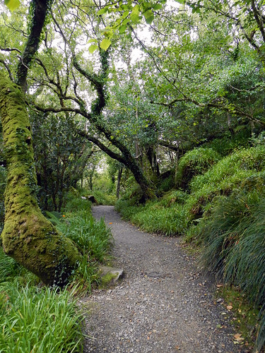 Path through the trees in Glenveagh National Park, Ireland