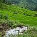 33209-013: Community-Managed Irrigated Agriculture Sector Project in Nepal.