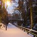 Late winter snow in Jesmond Dene